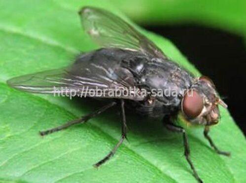 насекомые паразиты человека клещевым энцефалитом возможно